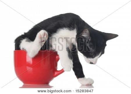 funny cat photo Bigstock