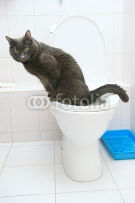 funny cat on a toilet stock photo