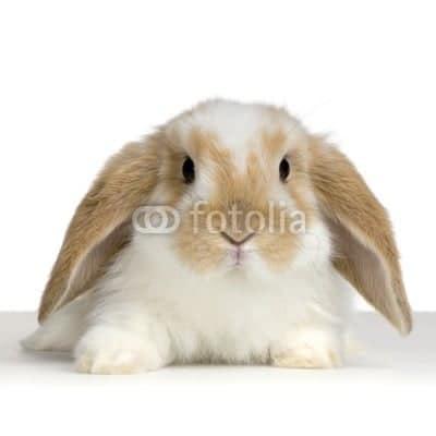 cute animal photos from Fotolia