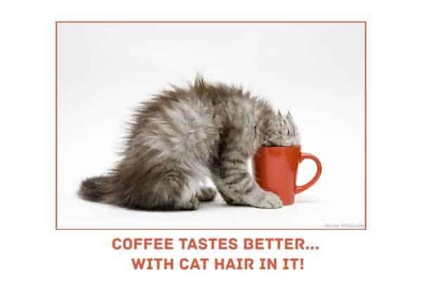 20 Funny Cat Stock Photos