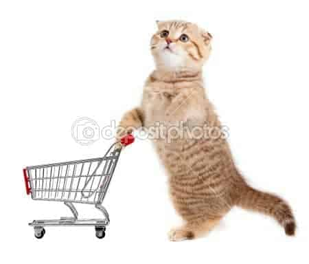 funny cat stock photo cat shopping for food