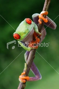 cute frog photo iStockphoto
