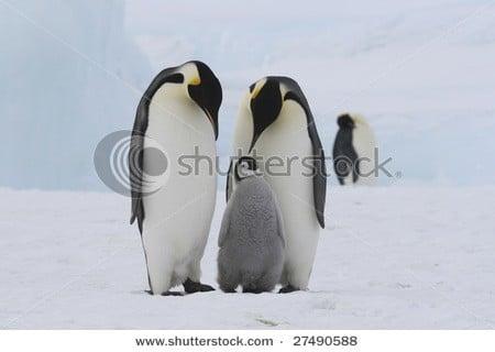 cute animal stock photos Shutterstock