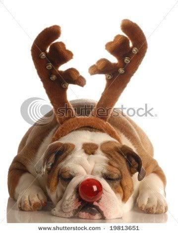 cute dog stock photo Shutterstock