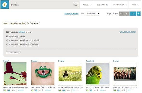 animals-stock-photos-from-photocase