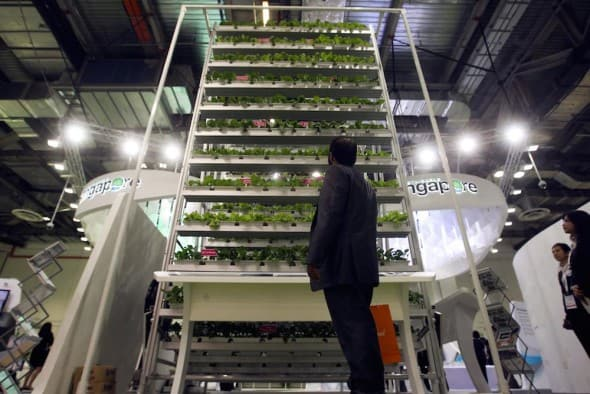epa03292039 A delegate looks at a vertical farming display at the World Cities Summit in Singapore, 02 July 2012. City leaders are gathered in Singapore to discuss the challenges of and innovative solutions for building sustainable and livable cities. EPA/STEPHEN MORRISON