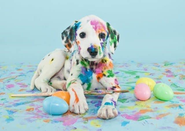 Adobe Stock Most Downloaded Dalmatian Puppy Paint Easter Eggs